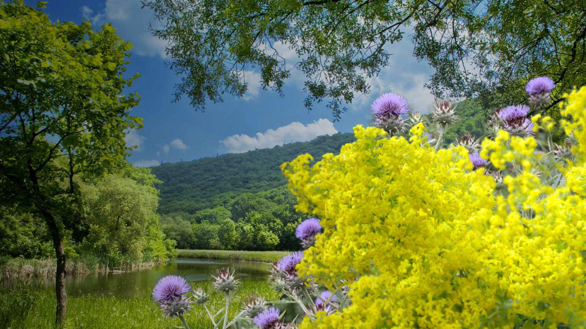 natura e fiori